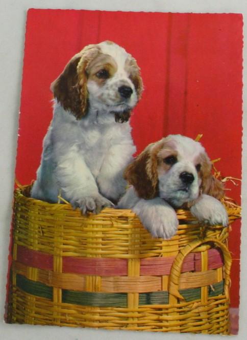 vintage postcard,dogs,basket,Printed in Germany