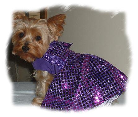 Amazon.com: Dog Harness Vest Sewing Pattern