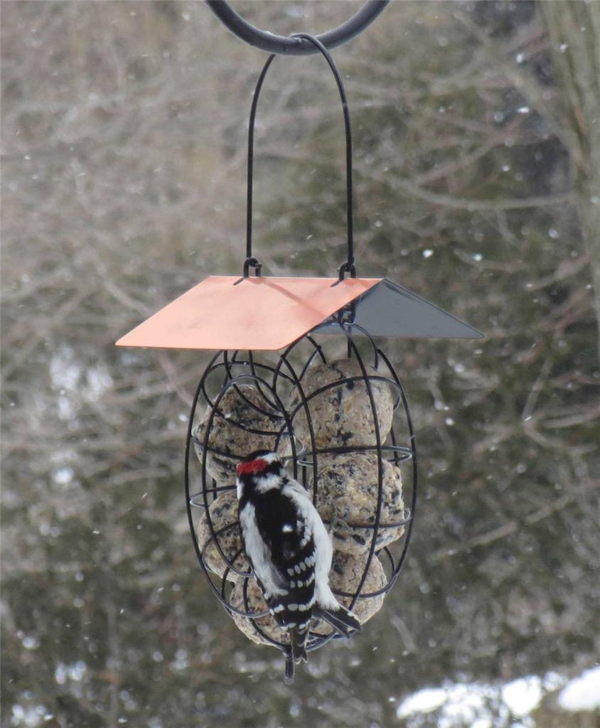 New suet ball round wire circle wild bird feeder red or for How to make suet balls for bird feeders