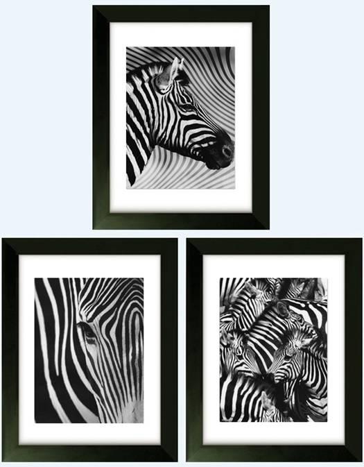 zebra black white picture print poster bedroom gift art