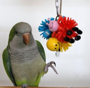 Squishy Bird Toys : Animalmania Squishy Balls Bird Parrot Cage TOY DRCCAB eBay