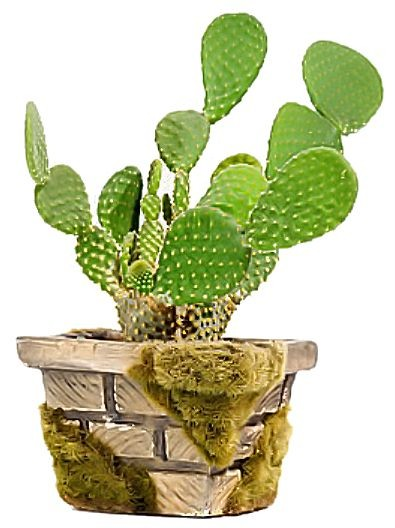 The Benefits of Opuntia Ficus Indica
