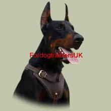 Padded Agitation Leather  Dog Harness H1 for  Doberman