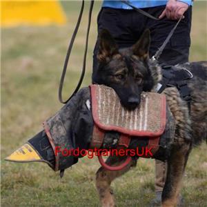 Training an adult dog