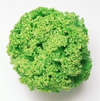 100-Organic-Green-Coral-Lettuce-seeds-non-hearting