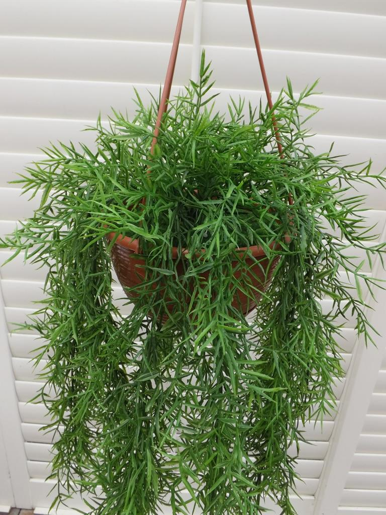 Mini Bamboo Plant : Artificial mini bamboo hanging plant in basket