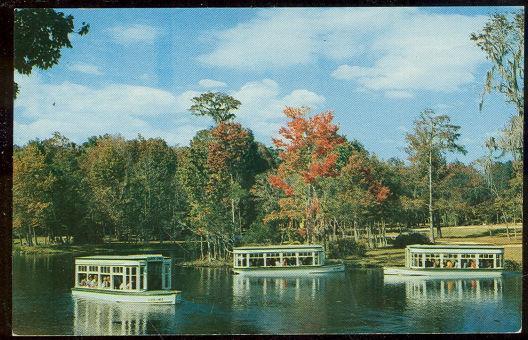 DOWN RIVER SCENE AT FLORIDA'S SILVER SPRINGS, Postcard
