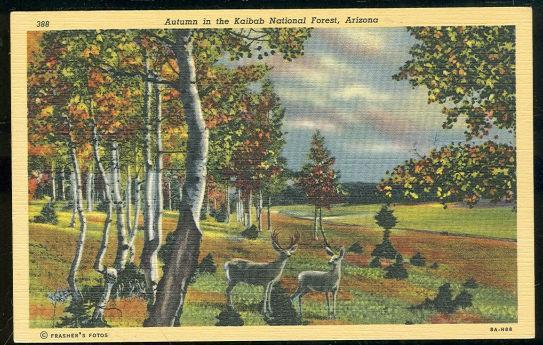 AUTUMN IN KAIBAB NATIONAL FOREST, ARIZONA, Postcard