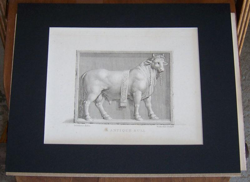 ANTIQUE PRINT OF AN AN ANCIENT BULL ENGRAVED BY W. SKELTON S. CULPRIT