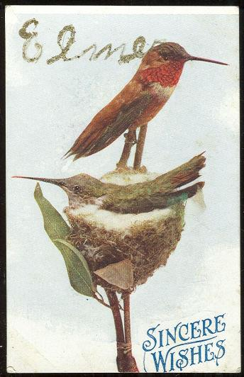 BIRDS ON NEST OFFERING SINCERE WISHES, Postcard