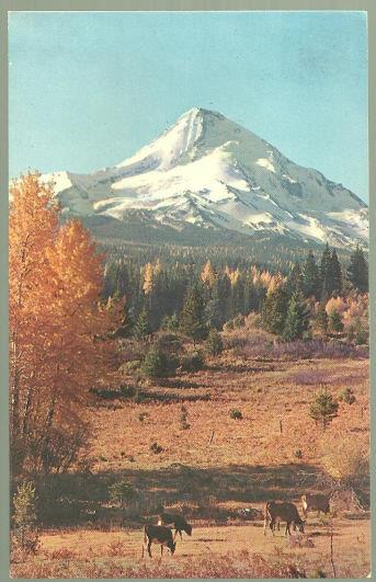 MT. HOOD, OREGON, Postcard