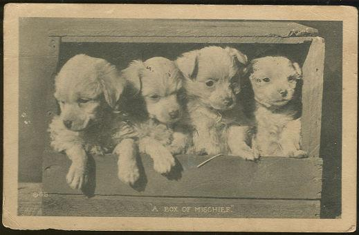 Image for FOUR PUPPIES, BOX OF MISCHIEF