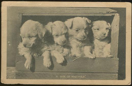 FOUR PUPPIES, BOX OF MISCHIEF, Postcard