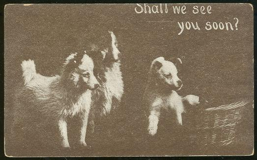 Image for THREE PUPPIES ASKING SHALL WE SEE YOU SOON