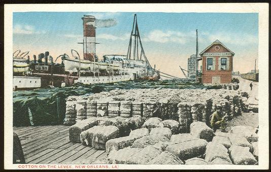 Image for COTTON ON LEVEE, NEW ORLEANS, LOUISIANA