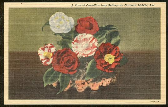 VASE OF CAMELLIAS FROM BELLINGRATH, MOBILE, ALABAMA, Postcard