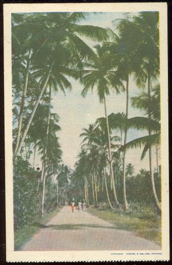 Image for THREE PEOPLE ON PALM LINED WALK IN TRINIDAD