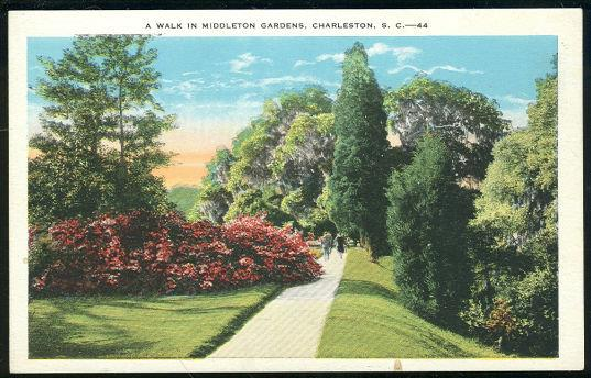 WALK IN MIDDLETON GARDENS, CHARLESTON, SOUTH CAROLINA, Postcard
