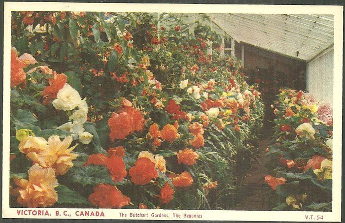 BEGONIAS, THE BUTCHART GARDENS, VICTORIA, BRITISH COLUMBIA, CANADA, Postcard