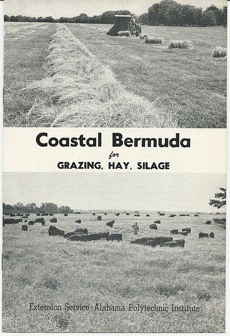 COASTAL BERMUDA FOR GRAZING, HAY, SILAGE, Andrews, O. N.