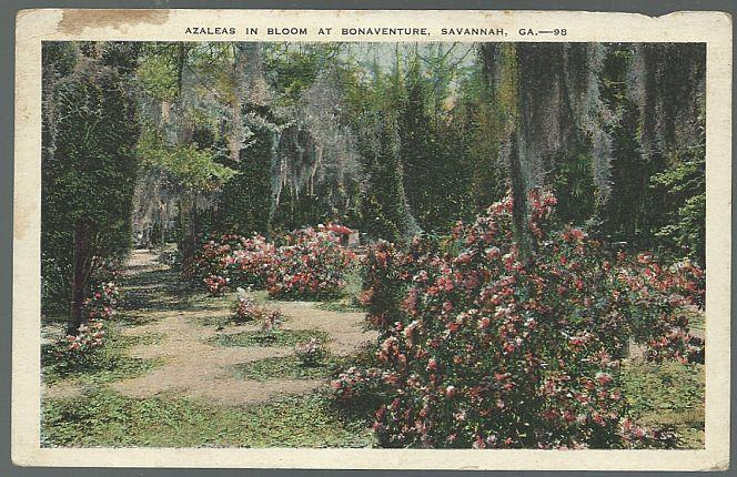 AZALEAS IN BLOOM AT BONAVENTURE, SAVANNAH, GEORGIA, Postcard