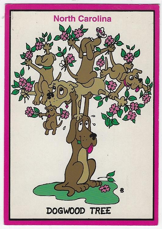 NORTH CAROLINA DOGWOOD TREE, Postcard