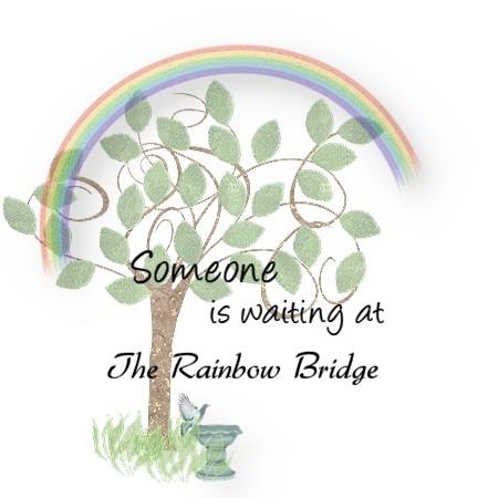 Pet Loss Sympathy Keychain Waiting for You at Rainbow Bridge Dog Cat