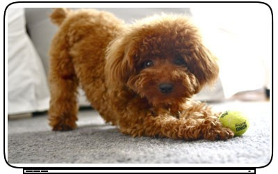 Puppy Dogs Toy Poodle Pets Animal Laptop Netbook Skin Decal Cover