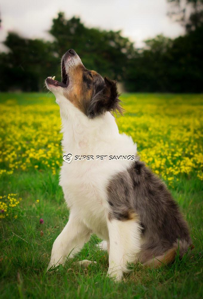 How To Train Dog To Stop Barking At Other Dogs