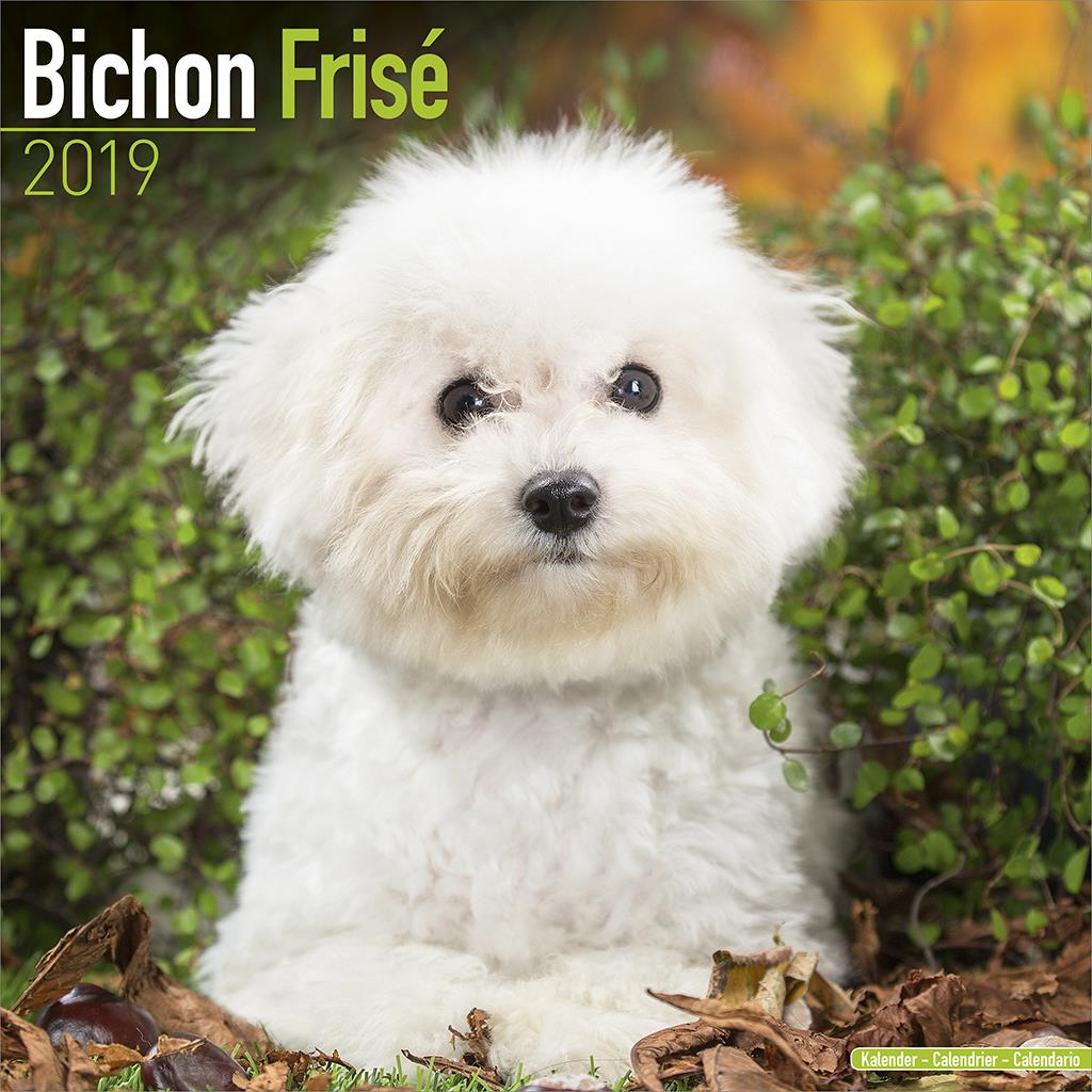 Bichon Frise 2019 Dog Calendar 15 Off Multi Orders Ebay