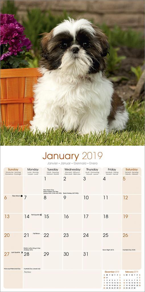 Shih Tzu 2019 Dog Calendar 15 Off Multi Orders Ebay
