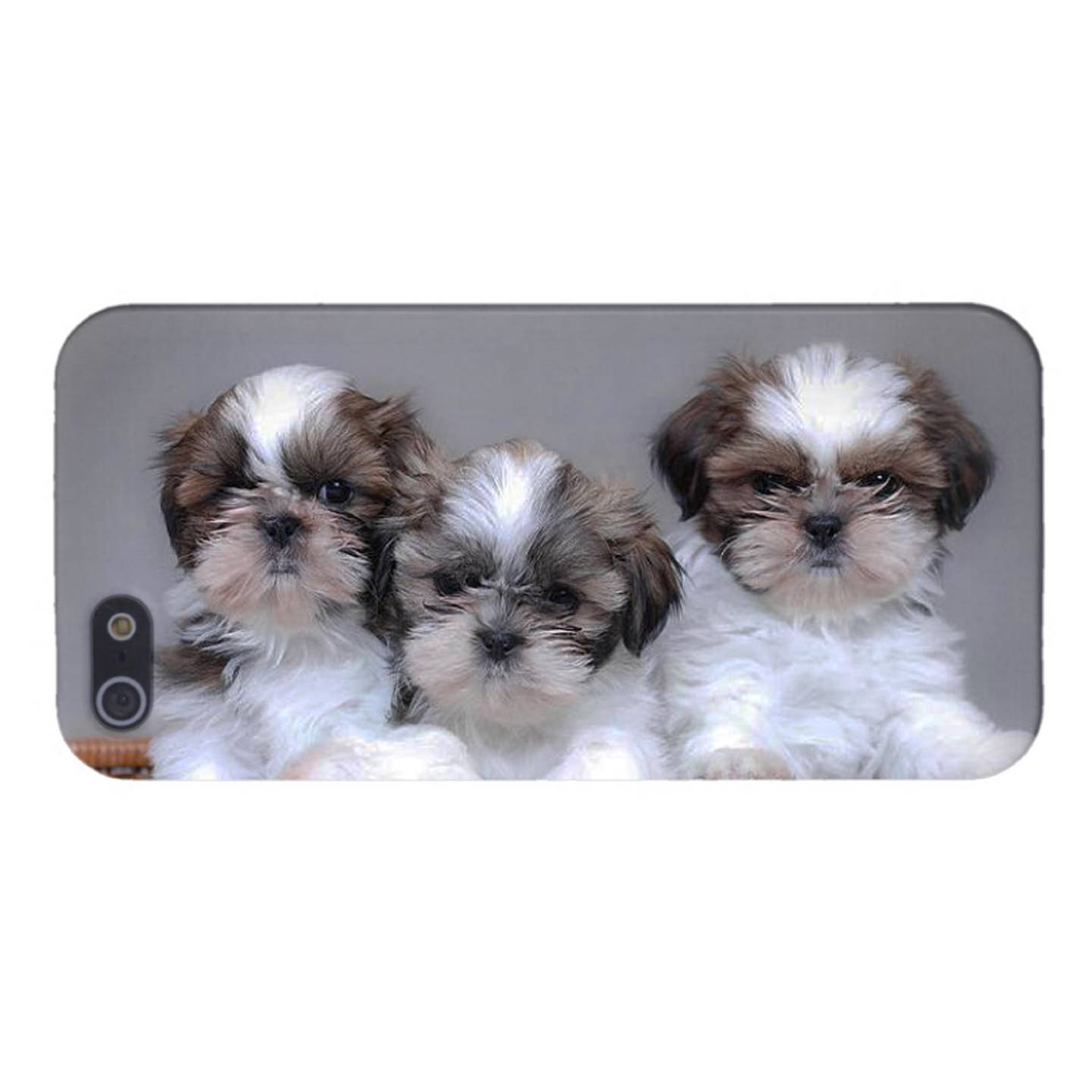 Puppies for Sale! Greenfield Puppies in Lancaster PA has been finding homes for puppies from reputable dog breeders since 2000! Find your puppy today