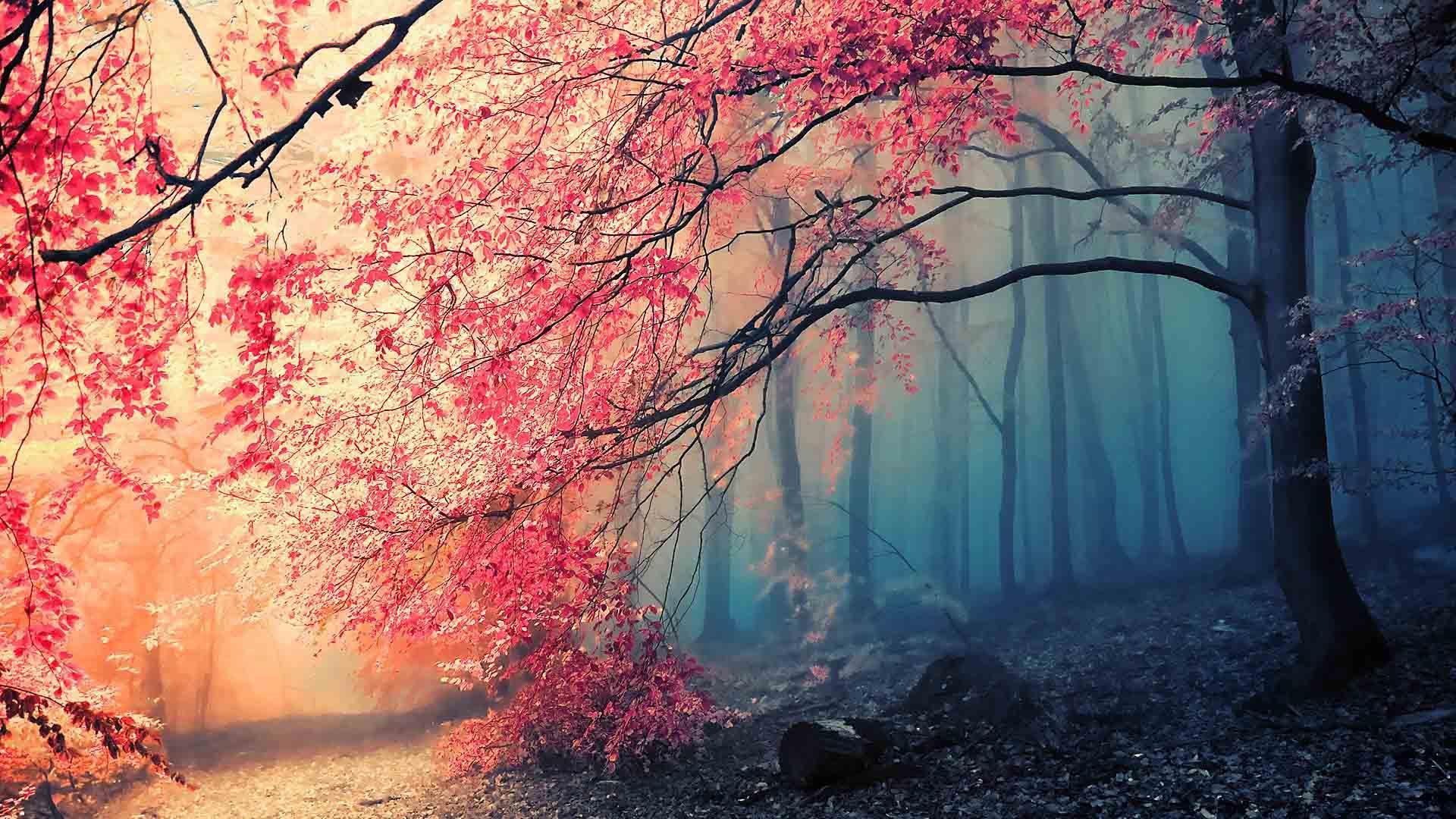 Arbre Sakura Du Japon Et Des Fleurs