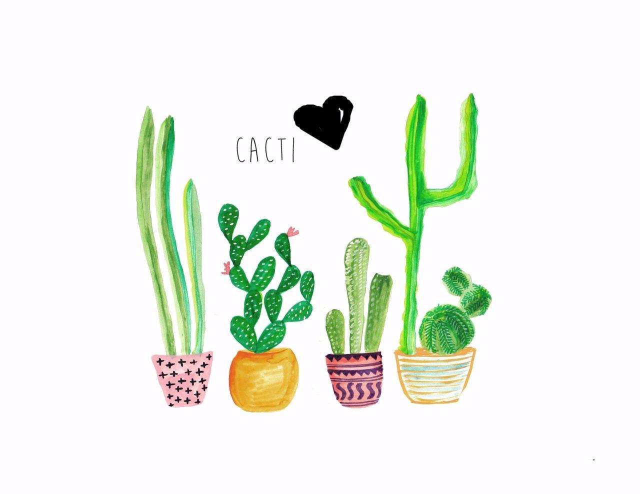 10 Aloe maculata kal810 Seeds Cactus Seeds Rare Korn seeds samen seeds