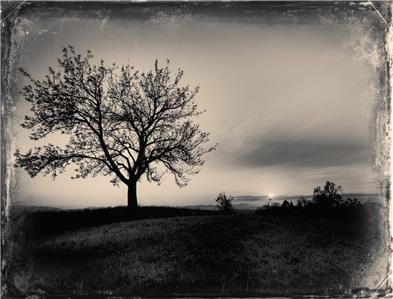 """/""""Lonely/"""" J Edwards Original Art Tin-Type Limited Series From Artist C0500 Art"""