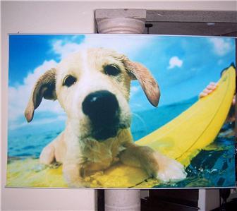 Pottery Barn Teen Surf Dog Wall Mural Ebay