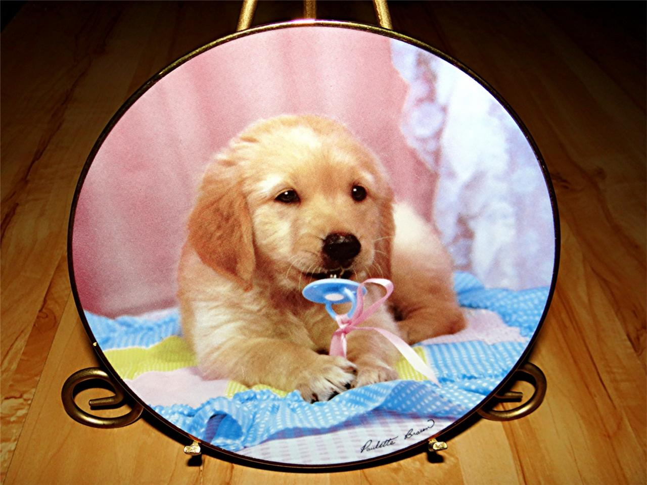 """""""Teething Time"""" Golden Puppy Portraits Golden Retriever Dog Puppy Plate"""