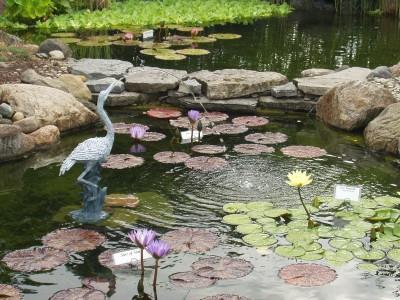 spitter Asian garden