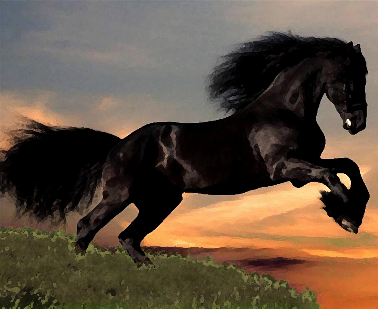 Majestic Friesian Horse Rearing Great High Quality