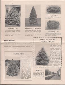 Musser Forests Inc Nursery Catalog 1948 Indiana Pennsylvania Christmas Trees Vg