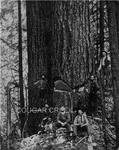 Details about 8x10 SIX LOGGERS ON SPRINGBOARDS W  WA  LOGGING PHOTO