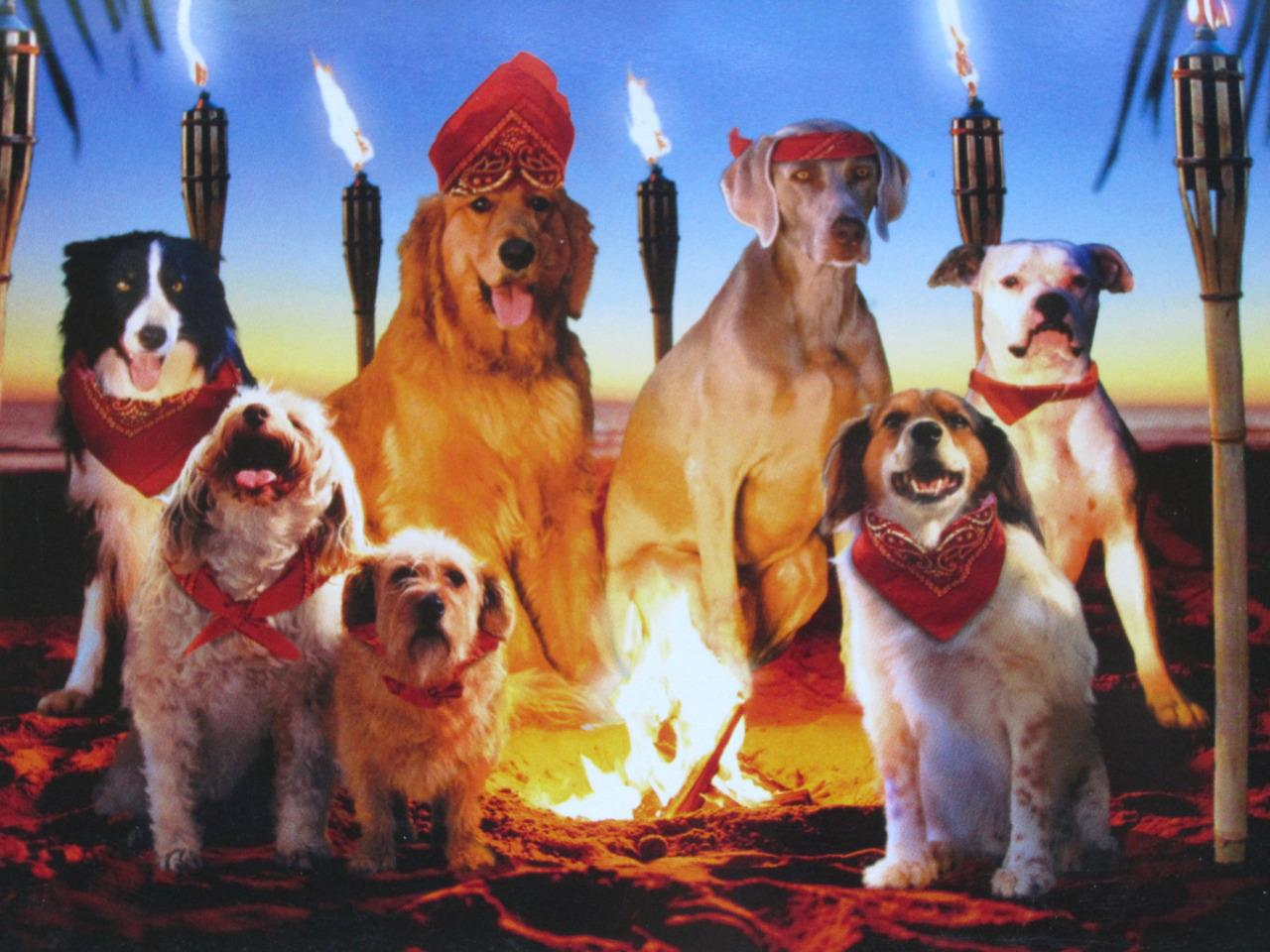 Dog Themed Birthday Card Avanti Press Funny Bright Dogs Tribe
