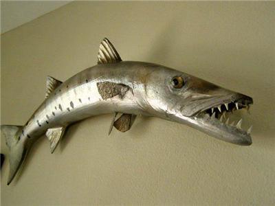 Fierce BARRACUDA FISH MOUNT/TAXIDERMY - BIG TEETH!!